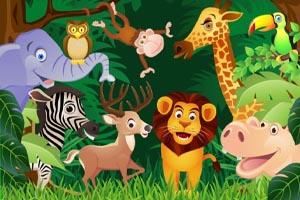 Animals Image Display